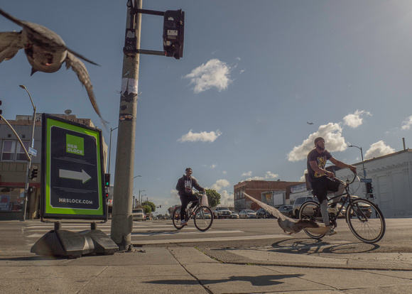 Two cyclist, two pigeons.