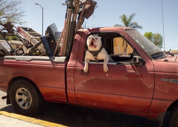 Dog in a gardening truck